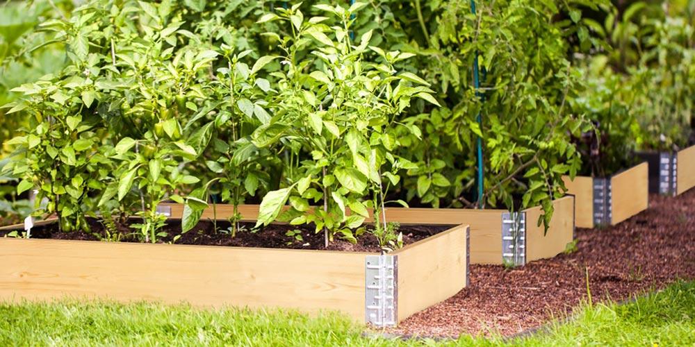 Square Metre Gardening – Veggie Planting Calculator