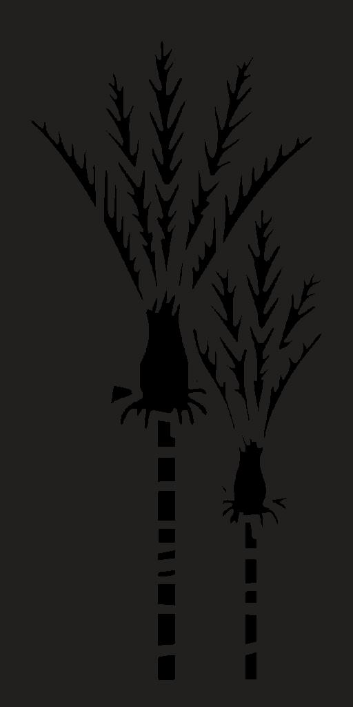 nikau-screen